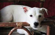 Richard Gilbert: My Dog Tale Published
