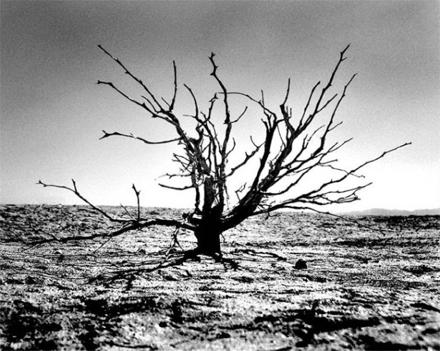 "Jeff Alu, ""Tree"", Coyote Dry Lake, 2007"