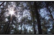 Ginat Salman: Dying Sun