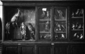 Art Spotlight: Heather Teets